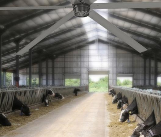 dairy-barn-fans